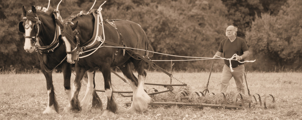 Going the way of the workhorse. (Photo: stavros images/Shutterstock)