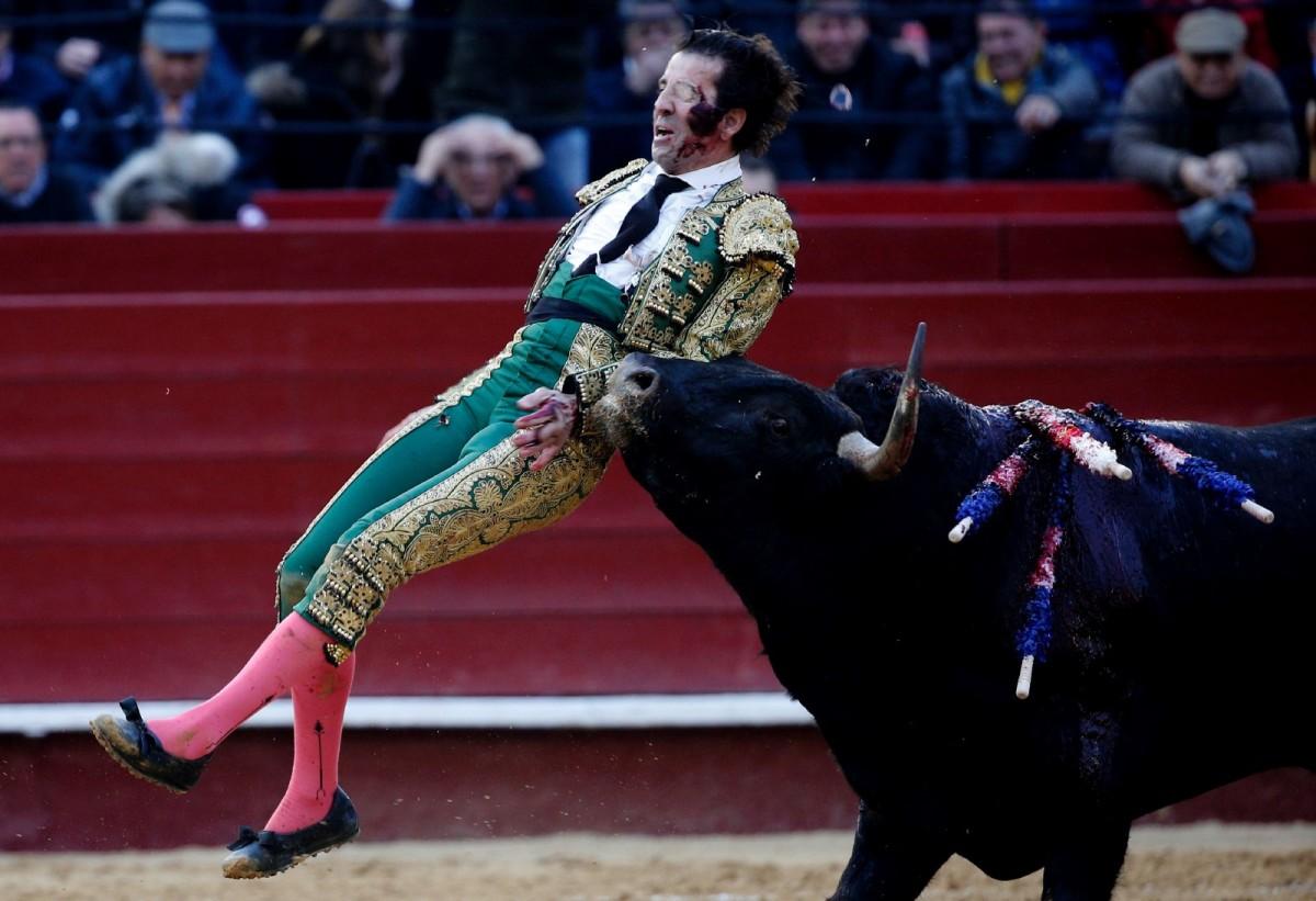 the senseless torture of animals during bullfighting