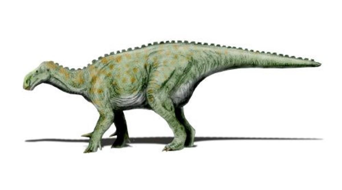 The iguanodon.
