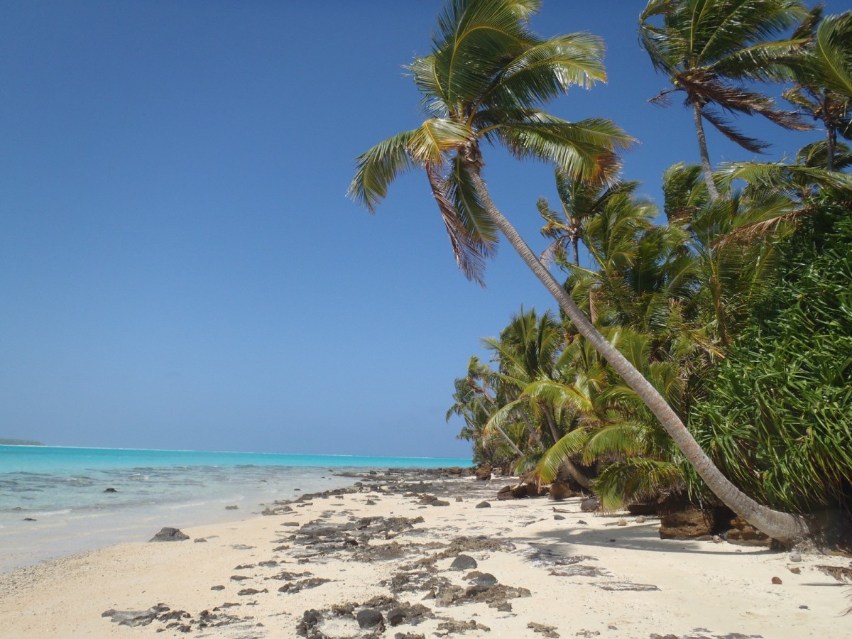 Photo showing a tropical beach with palm trees