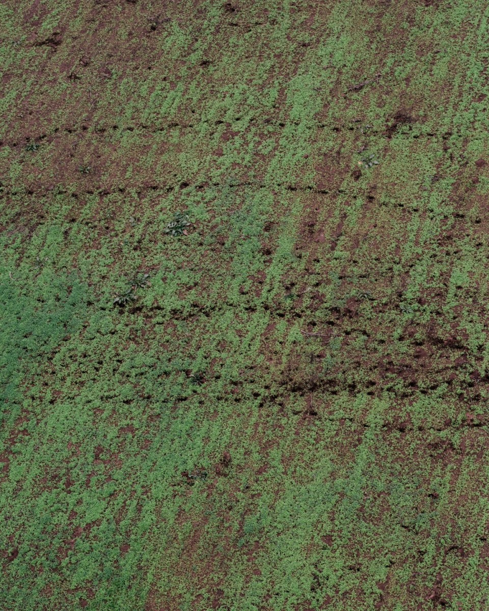 Damage from feral hogs is visible in a field of a farmer who works with Helibacon. Helibacon arranges deals with farmers who let them take hunting trips on their land. Helibacon and their customers get access to land and hogs, and the farmers get expensive hog eradication for free. (Photo: Benjamin Rasmussen)