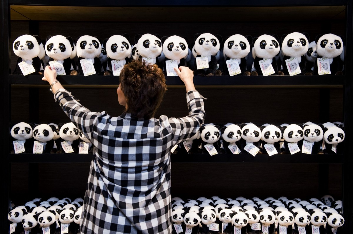 A person arranges stuffed pandas in a shop of the Ouwehands Zoo on April 6th, 2017, prior to the arrival of two pandas from China. (Photo: Piroschka Van De Wouw/AFP/Getty Images)