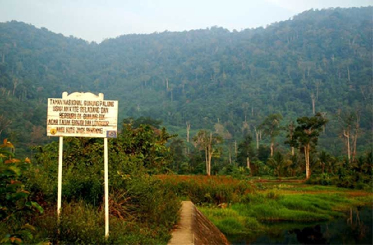 The entrance to Gunung Palung National Park, a preserve that suffers from illegal logging. (Photo: Health in Harmony)
