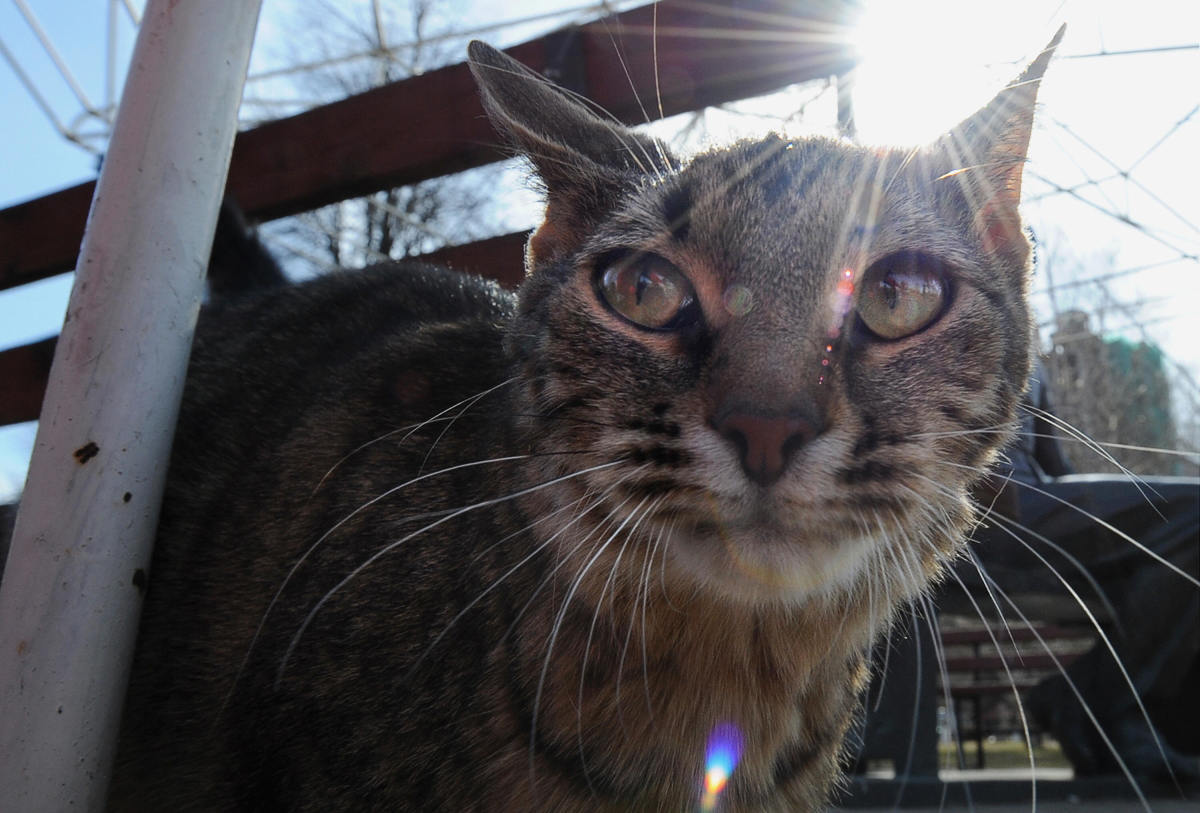 A stray cat on April 8th, 2009.
