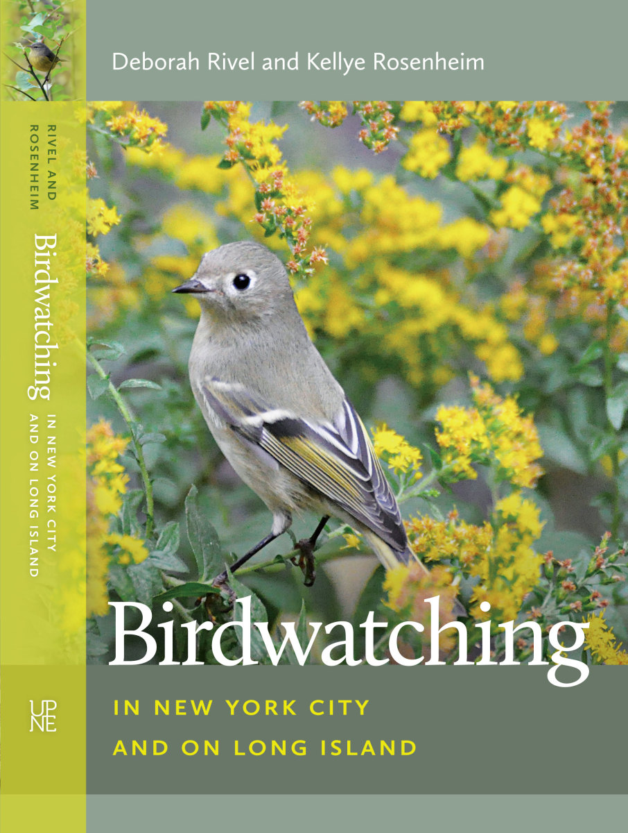 Birdwatching in New York City and on Long Island.
