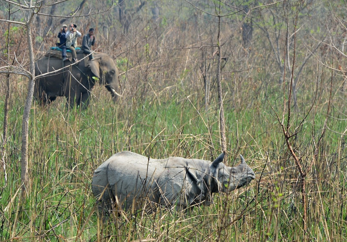 A Nepalese veterinary and technical team prepare to dart a rhino in Chitwan National Park on April 3rd, 2017.