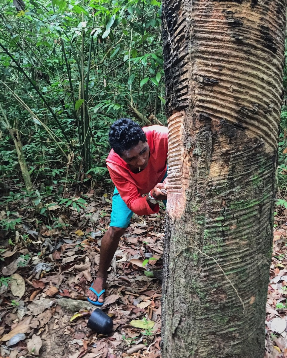 Xoba scores a Seringa tree.
