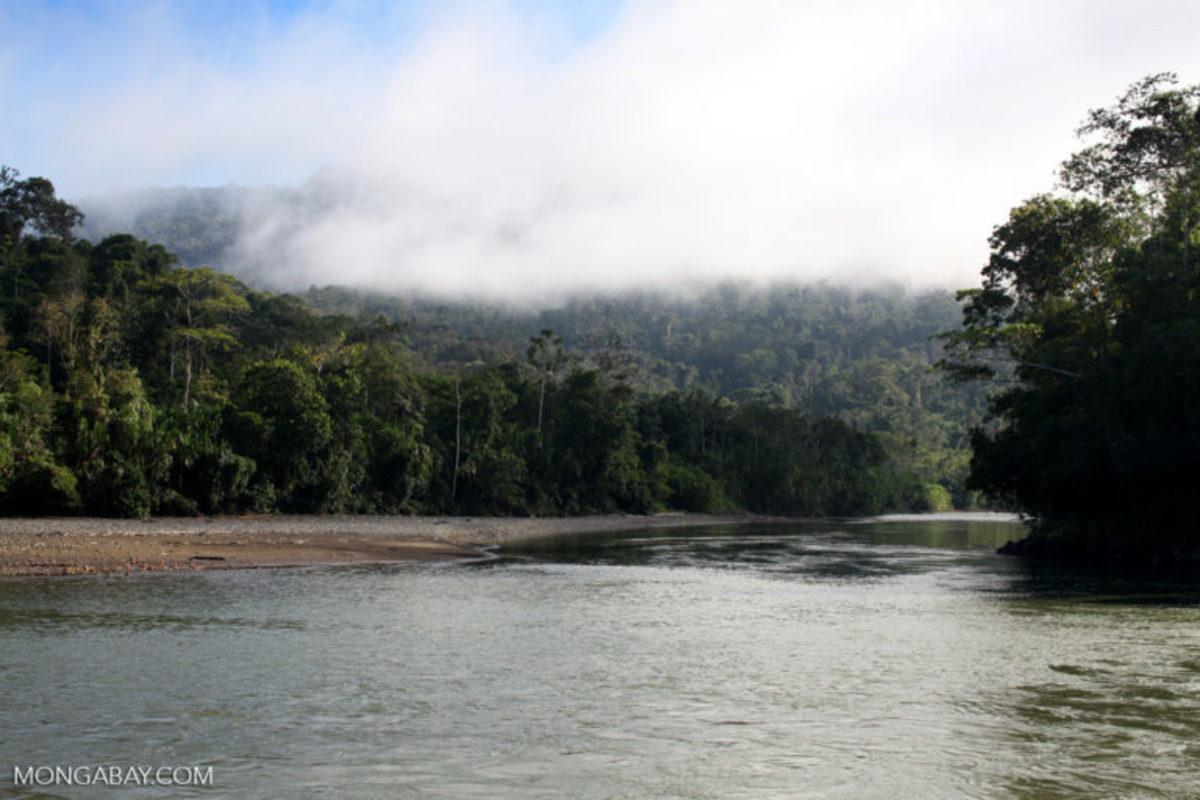 The Rio Pini Pini flowing out of Manu National Park in Peru.