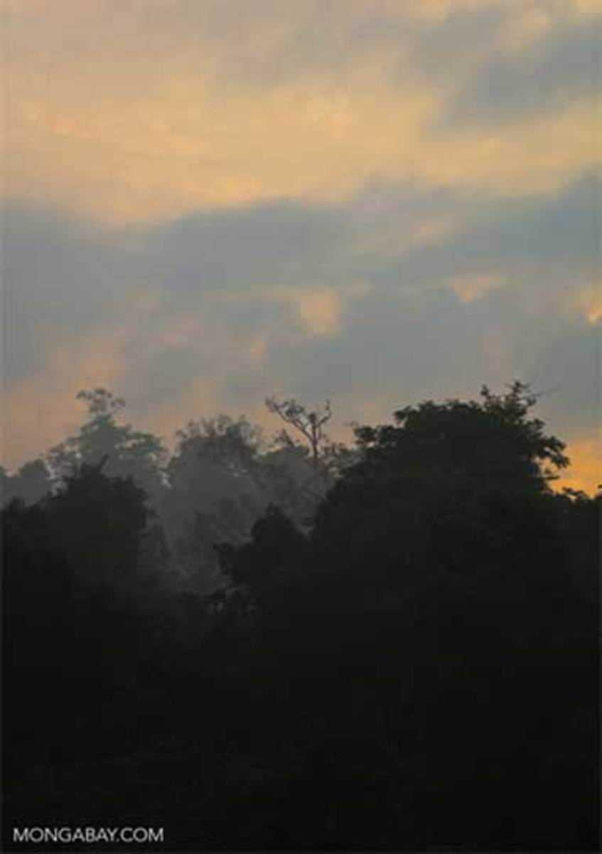 Cambodian rainforest at dawn. Though economically poor, Cambodia is rich in natural resources, forests, and biodiversity.