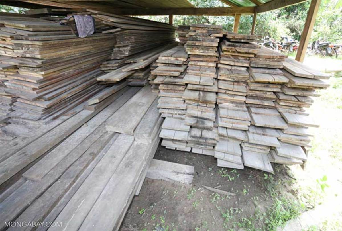 Lumber harvested illegally in Cambodia that was confiscated and stacked at a ranger station. Deforestation is rampant in Cambodia, a problem that could see less oversight by the U.S. during Trump's tenure as president.