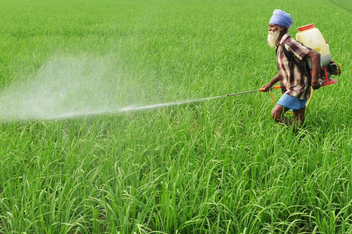 A farmer sprays insecticide onto crops in a paddy field on the outskirts of Amritsar, India, on July 16th, 2017.
