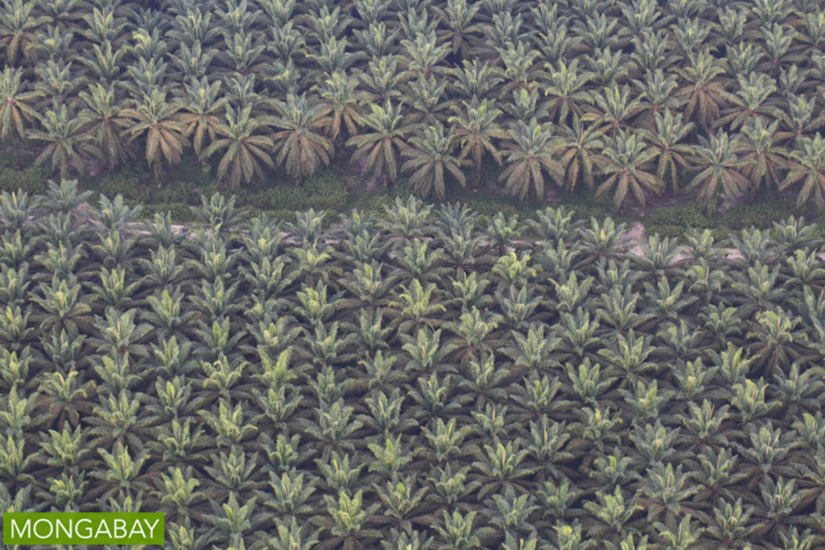 A sea of oil palm on Indonesia's main western island of Sumatra.