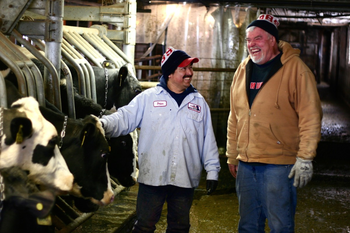 Pedro and Loren evaluate the cows.