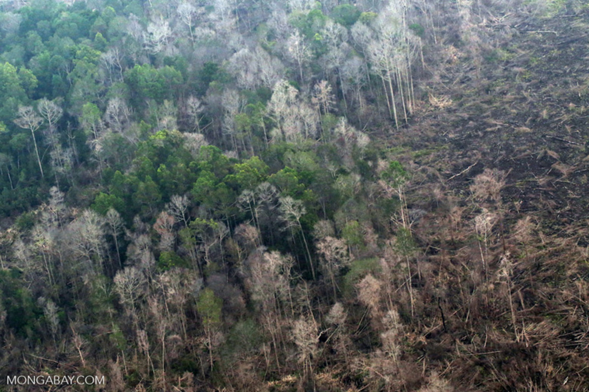 A burned peat swamp on Indonesia's main western island of Sumatra. Tropical rainforests rarely burned in the past, but are seeing serious wildfires as climate change worsens.