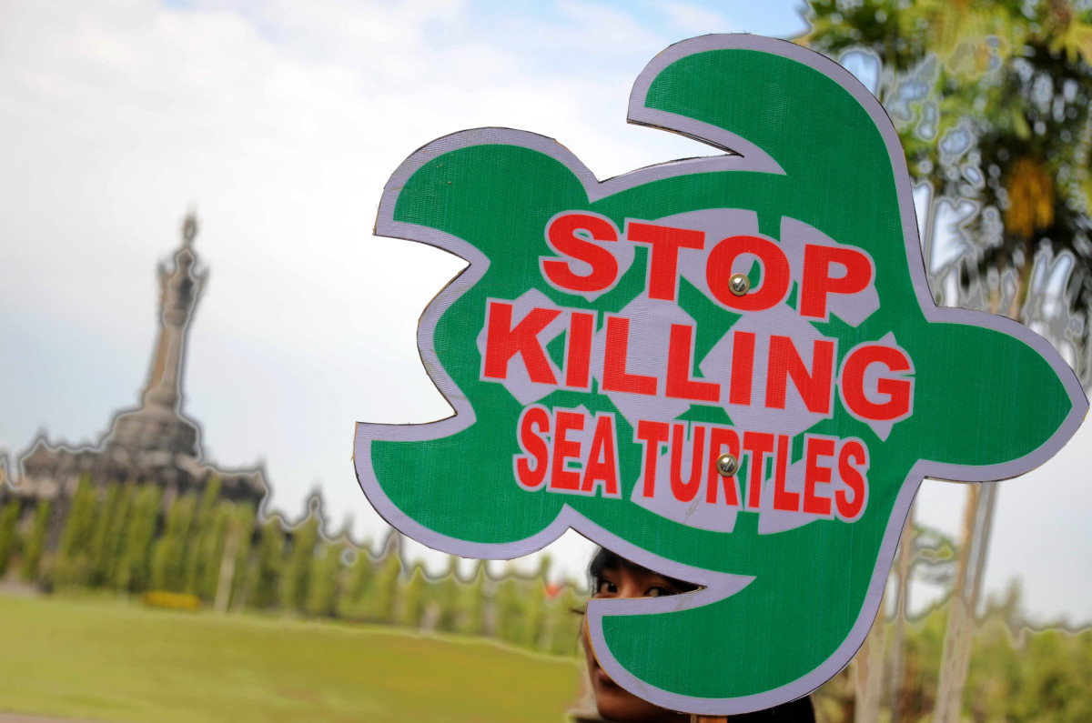 An Indonesian activist from ProFauna displays a placard that reads Stop Killing Sea Turtles during a demonstration in Denpasar on Bali island on June 19th, 2013. The activists were protesting the illegal sea turtle trade in the local market.