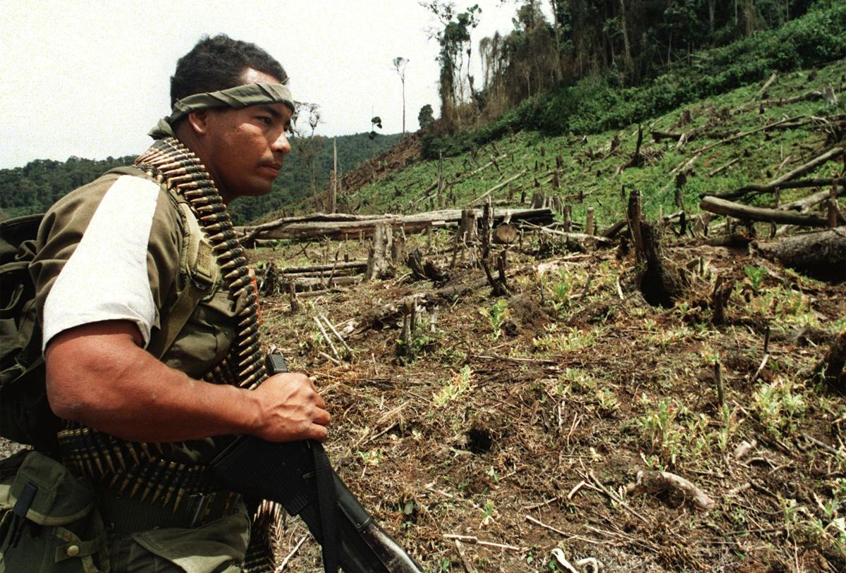 A Colombian soldier looks at a deforested land formerly used by drug traffickers for poppy plantations.