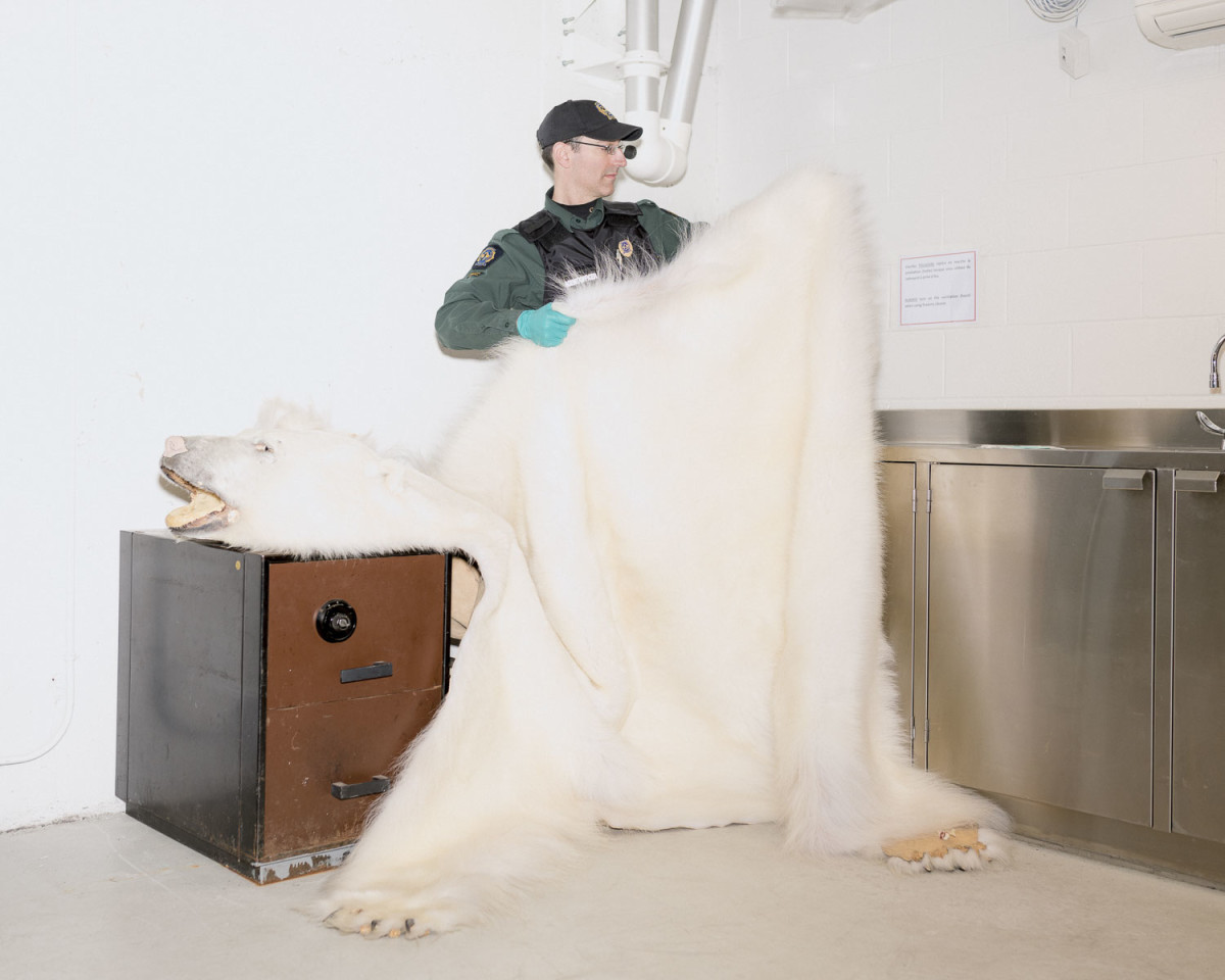 Polar bears Leaman_411