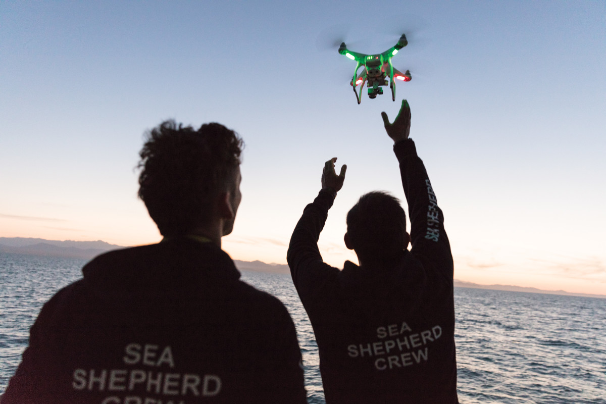 Sea Shepard volunteers deploy a drone to spy on Mexican fishermen who they suspect are poaching totoaba sea bass from the waters of the Gulf of California.