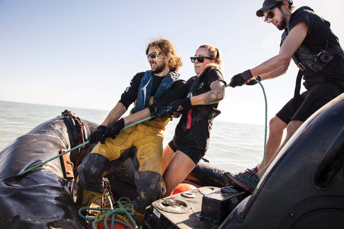 Sea Shepherd volunteers attempt to pull the anchor of an illegal gillnet that was placed in the Gulf of California and snagged by steel hooks dragged behind the Sam Simon. Crewmembers use rubber zodiac skiffs to haul the nets aboard and attempt to rescue or document any sea life discovered in the net.