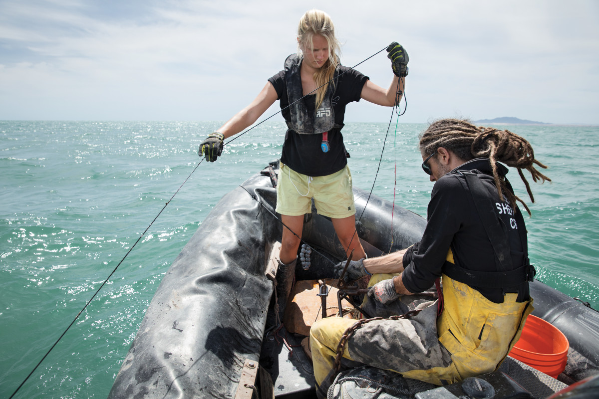 Sea Shepard volunteers pull up the anchor to an illegal longline that was placed in the Gulf of California by Mexican fishermen and snagged by steel hooks dragged behind the Sam Simon.