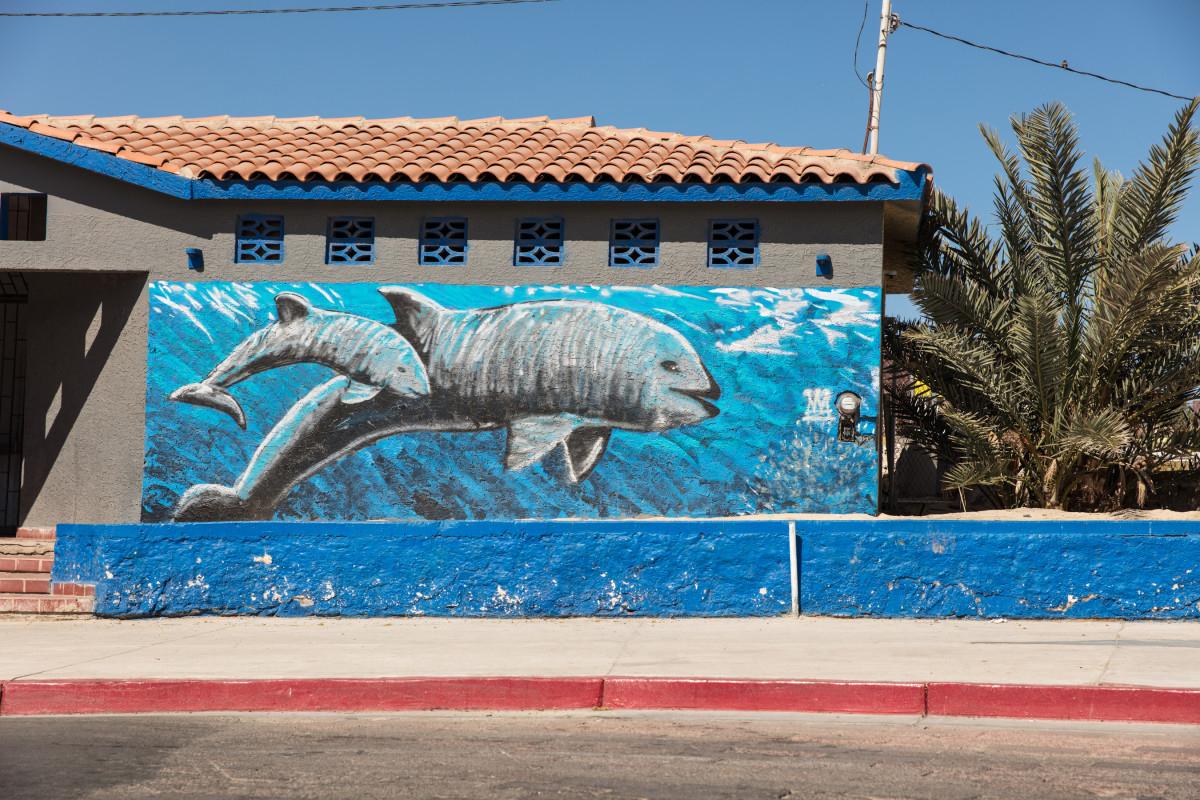 A mural of the endangered vaquita on a bathroom near downtown San Felipe, Mexico. The vaquita, although rarely ever seen, is an icon for tourism in the region.