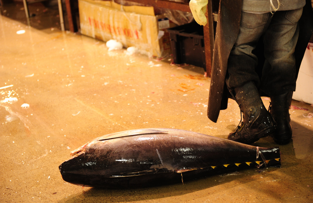 A tuna lies on the floor at New York's main wholesale fish market.