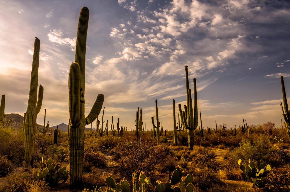 The Sonoran Desert in Arizona.