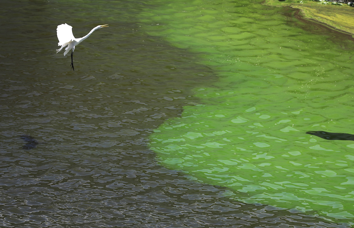how to stop toxic algae from overwhelming florida s largest lake