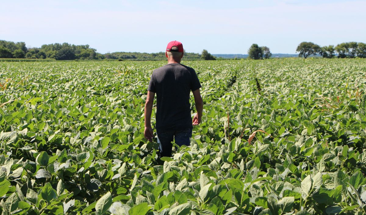 Farmer Terry Davidson walks through his soy fields on July 6th, 2018, in Harvard, Illinois.