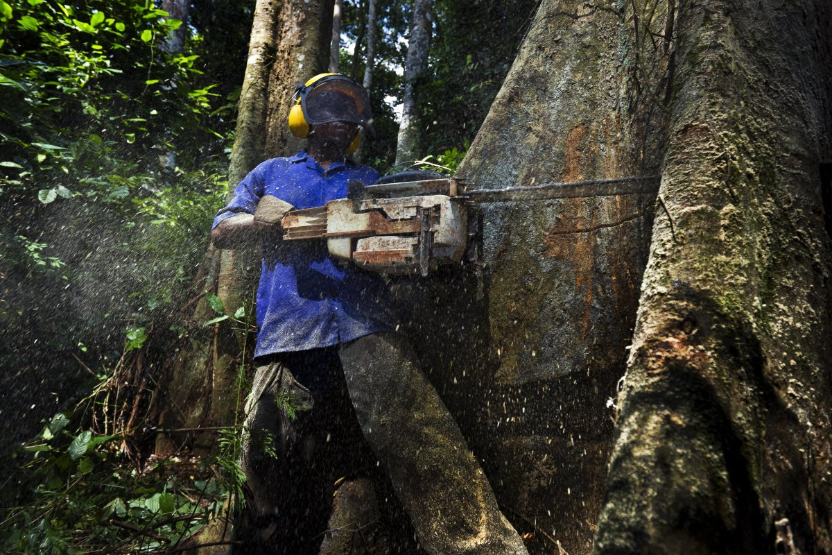 How Furniture Demand In America Thins Forests Across Central Africa