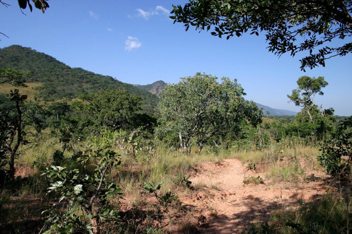 Wooded savanna in Malawi.
