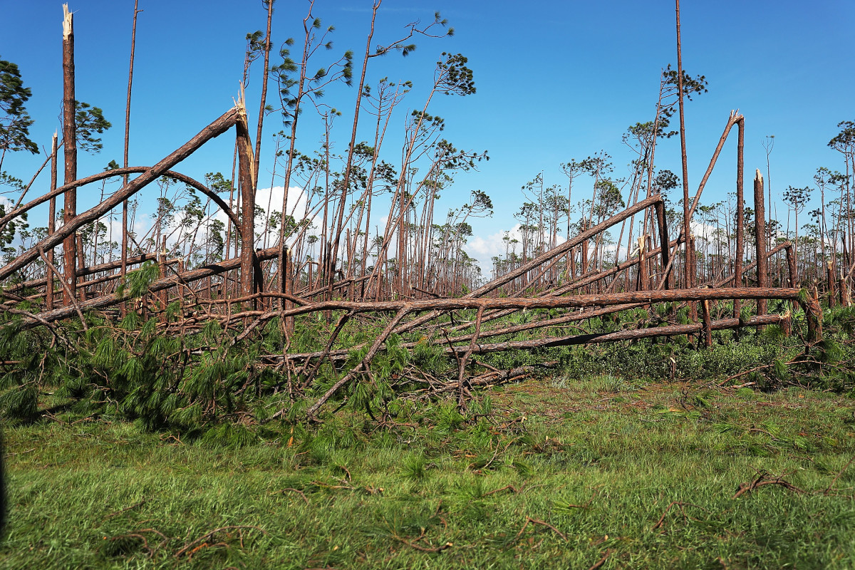 Toppled trees are seen after Hurricane Michael passed through the area on October 11th, 2018, in Mexico Beach, Florida.