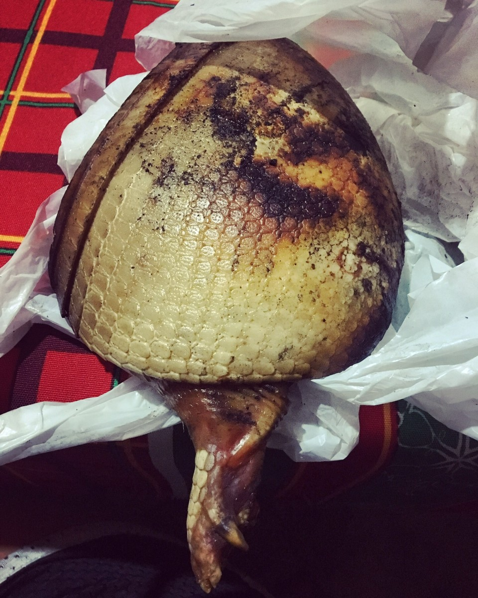 Dinner in São Pedro: the hindquarters of an armadillo that someone hunted in the surrounding forest.