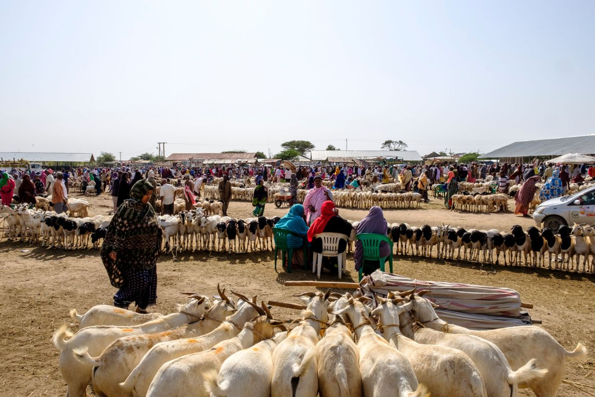 A general view of the livestock market in Hargeisa, Somaliland, on August 18th, 2018.