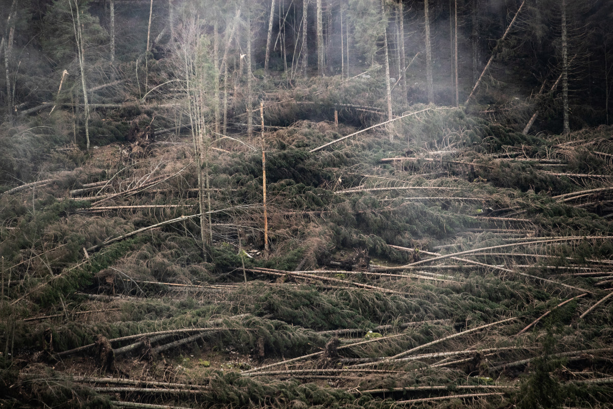Fallen trees lie in the Marcesina Plain on November 8th, 2018, in Asiago, Italy. On Monday, October 29th, violent winds and heavy rains devastated the forests of the Asiago Plateau. Around 300,000 trees were flattened—10 percent of the woodland heritage. It will take almost a century for the forest to return to normal. The damage is also economic, because Italy already imports 80 percent of the wood it consumes. The summer of 2018 was the hottest on record in Italy.