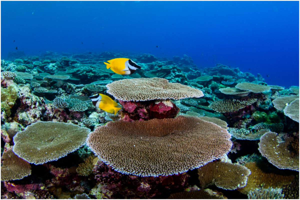 A shallow reef has hard, stony corals.