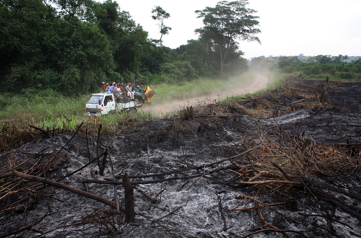 A stretch of jungle, scorched for agricultural use, in the Democratic Republic of Congo.