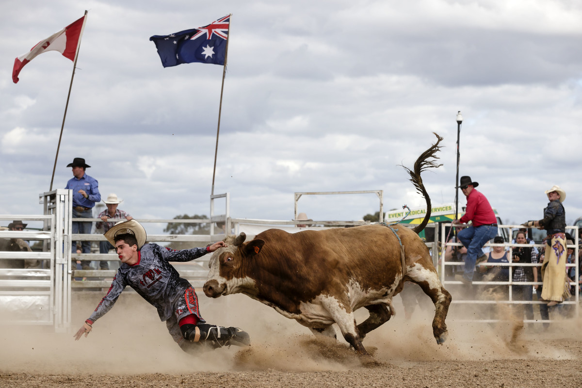 A bull chases down a rodeo clown at the 2017 Deni Ute Muster on September 29th, 2017, in Deniliquin, Australia.
