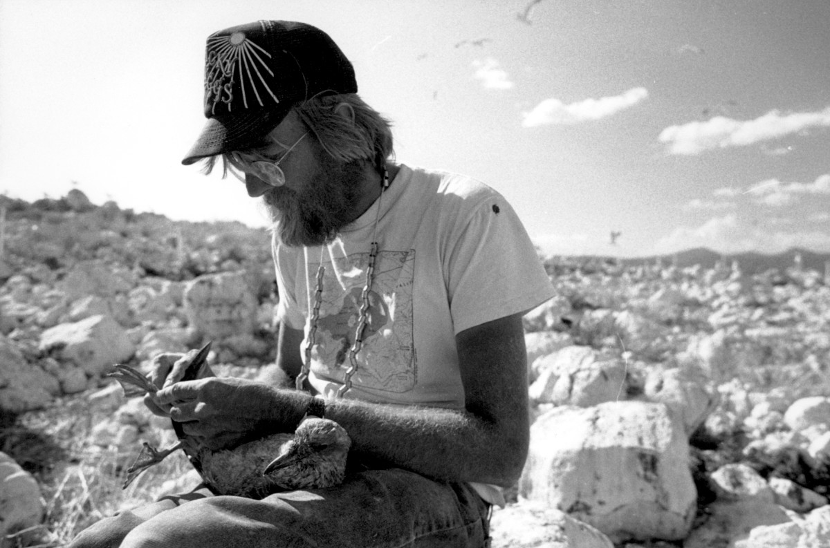 Ornithologist Dave Shuford banding a California Gull chick at Mono Lake in the early 1980s.