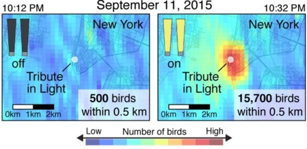 Radar images show high numbers of birds circling the 9/11 tribute lights as compared to when the installation is turned off.