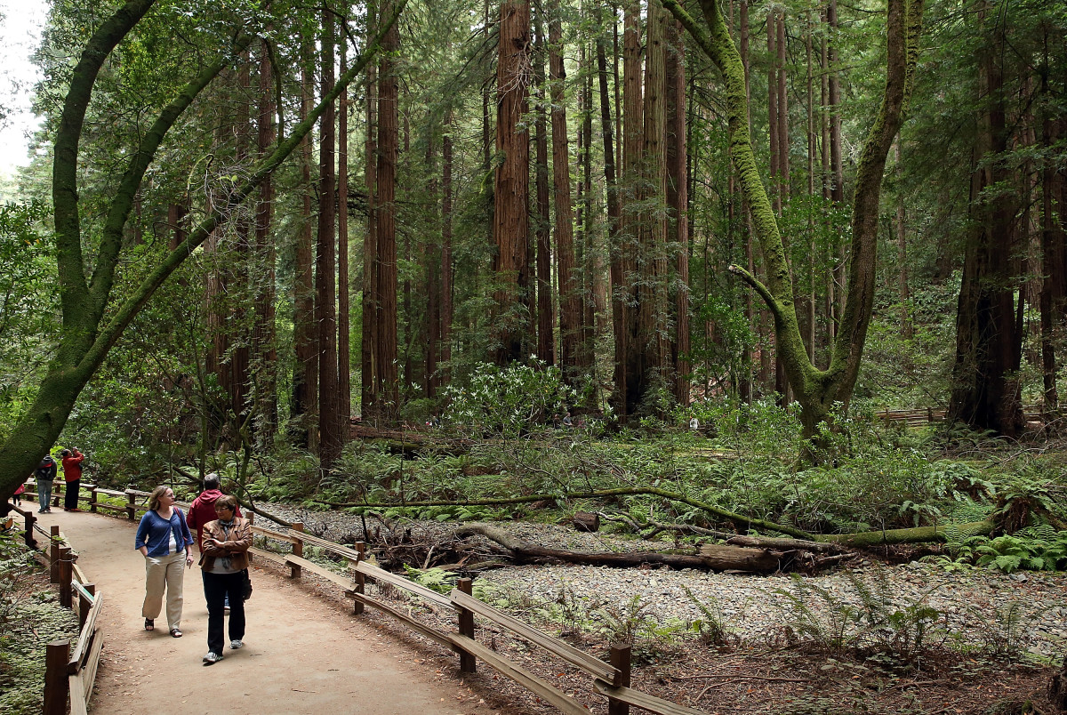 Visitors walk along a path of Coastal Redwood trees at Muir Woods National Monument on August 20th, 2013, in Mill Valley, California.