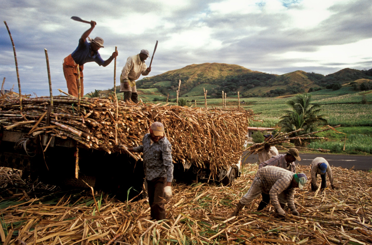 Field workers on a sugarcane farm in Fiji.
