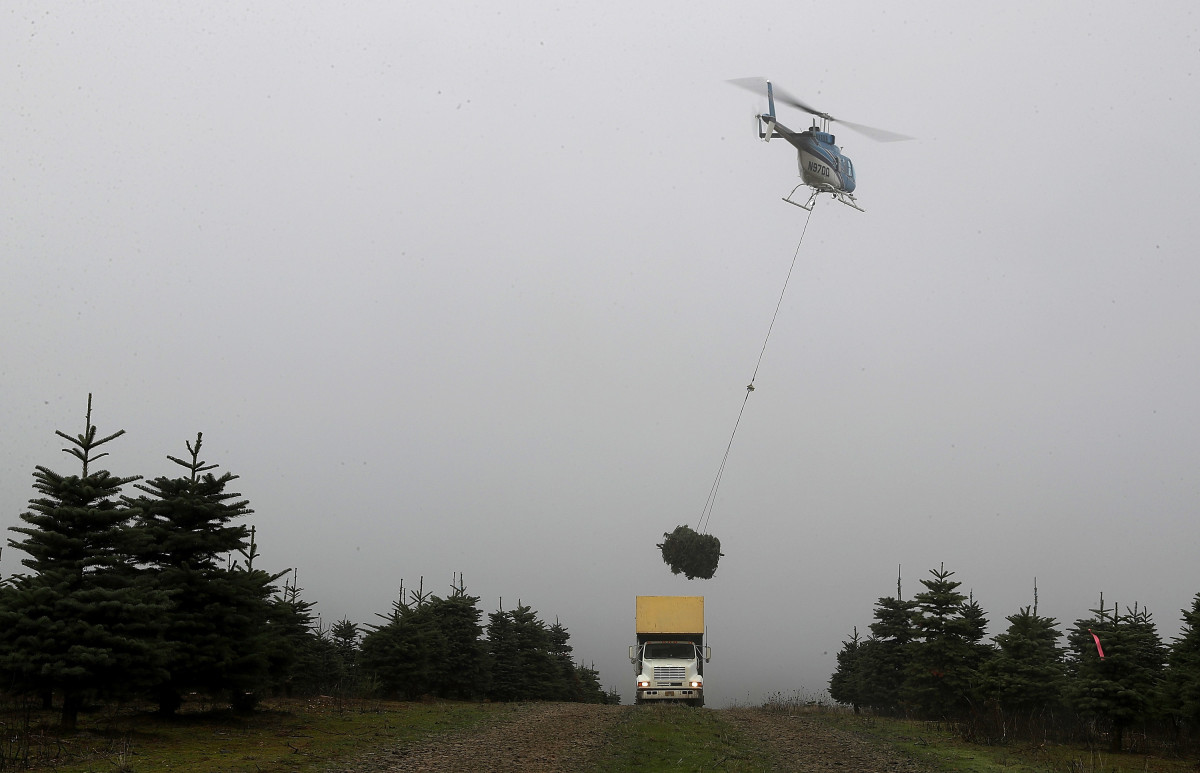 A helicopter drops a bundle of freshly harvested Christmas trees into a truck at the Holiday Tree Farms on November 18th, 2017, in Monroe, Oregon.
