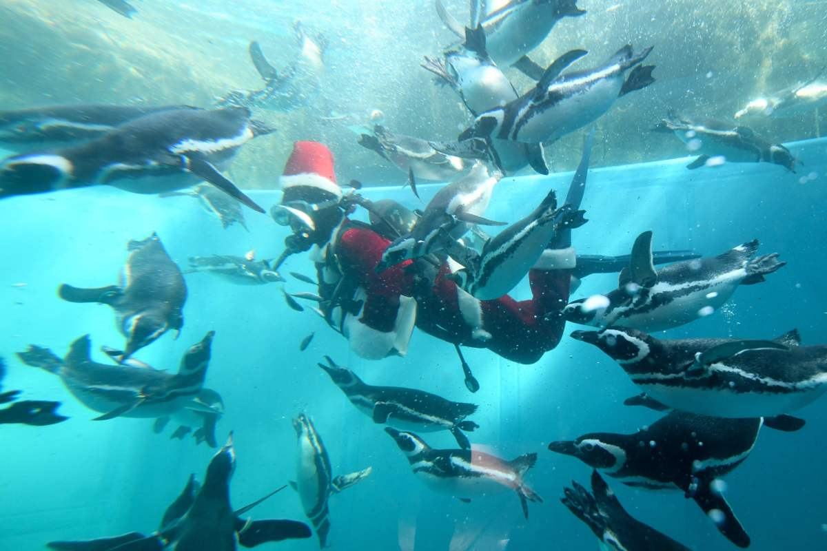 A keeper clad in a Santa Claus costume feeds Magellanic penguins in a water tank as part of Christmas events at Hakkeijima Sea Paradise amusement park in Yokohama, a suburb of Tokyo, on December 5th, 2017.