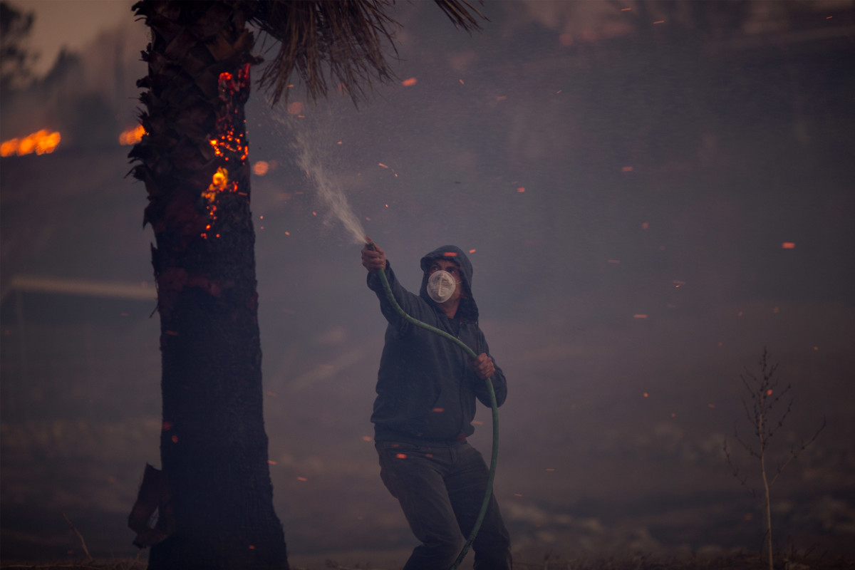 A resident hoses a burning palm tree during the Creek Fire.
