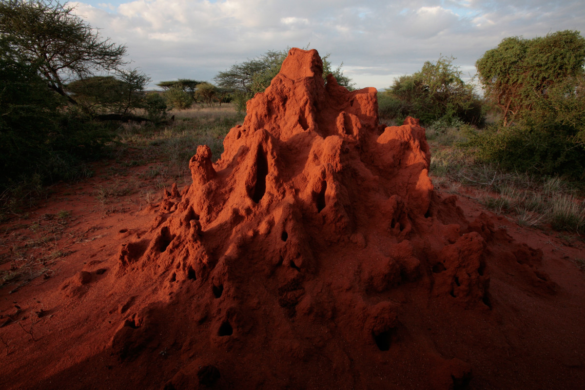 A termite mound catches the evening sun in the Masai Mara Game Reserve, Kenya.