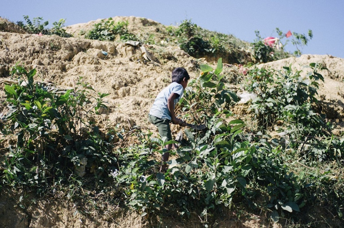 A young Rohingya boy hacks at roots on a hill inside the Kutupalong-Balukhali refugee camp to gather what remains for use as fuel.