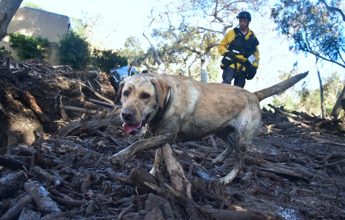 A member of a search and rescue team and his search dog sift through debris looking for victims on a property in Montecito, California, on January 12th, 2018.