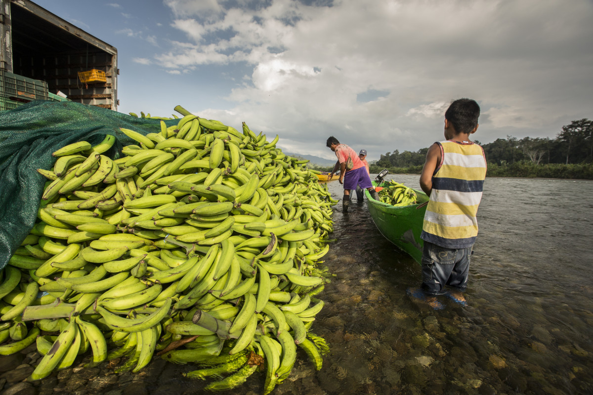 Locals prepare to transport plantains along the Sixaola River in southeastern Costa Rica.