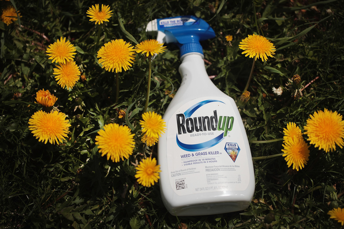 An estimated 13,000 plaintiffs are suing Monsanto for allegedly causing their cancer with the weed-killer Roundup.